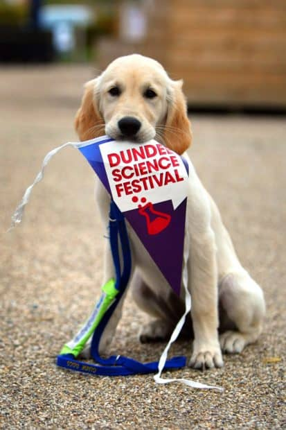 guide-dogs-portia-with-bunting-copyright-kris-miller-the-courier